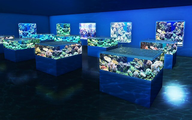 DMMかりゆし水族館 画像10