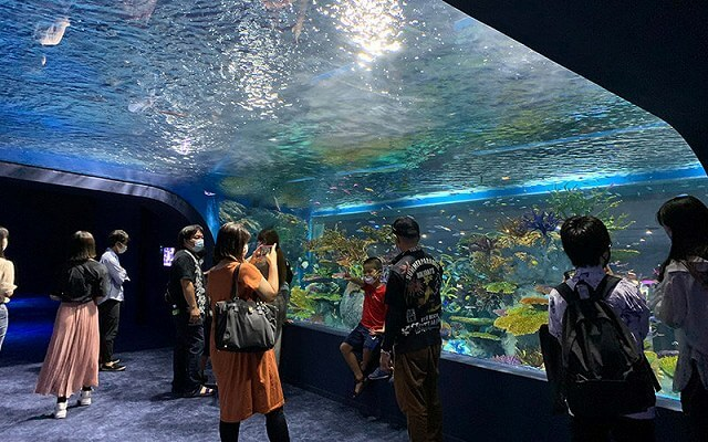 DMMかりゆし水族館 画像9