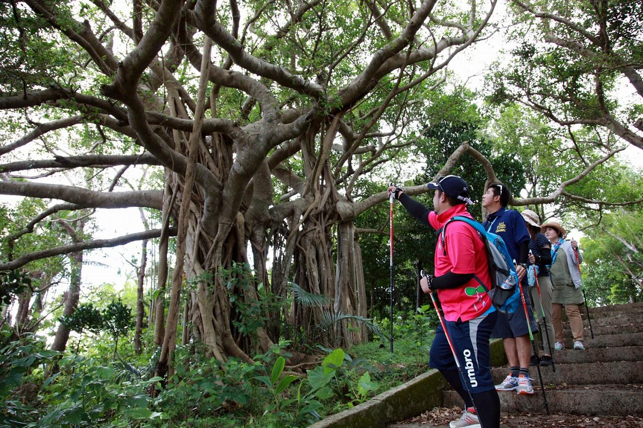 水と緑と太陽の里!沖縄県宜野座村を堪能するオススメドライブコース